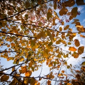 brian-hirschy-photography-fall-photography-2012-11-of-20