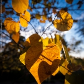 brian-hirschy-photography-fall-photography-2012-13-of-20