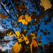 brian-hirschy-photography-fall-photography-2012-16-of-20