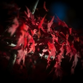 brian-hirschy-photography-fall-photography-2012-2-of-20