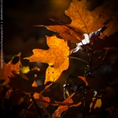 brian-hirschy-photography-fall-photography-2012-3-of-20