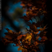 brian-hirschy-photography-fall-photography-2012-4-of-20