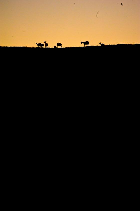 Gangjia_Grasslands_2011_Brian_Hirschy_Photography-5-of-14